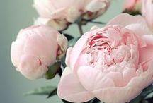 BLOOMS / Flowers   Floral Arrangements   Bouquets   Fresh Cut Flowers   Seasonal Arrangements   Wedding   Table Centrepieces   Tabletop   Vases   Gardens   Flower Beds