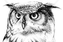 OWL | PRINTS / Owl print, graphic & design inspiration for printed T-Shirts & Products. #downloadt-shirtdesigns
