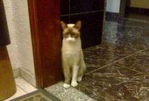 Gatos / Cats  / Gatos são viciantes... / by Guiomar Braga