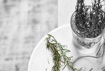 Herb, Plant, Green / by Saori Ohki