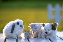 çeşitli hayvanat / all kinds of animals