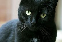 Cats-My Favorite Black Cat, Michelle / In Memory of Michelle..... I miss you SO much...  / by Navybluecats