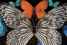 BUTTERFLY | PRINTS / Butterfly print, graphic & design inspiration for printed T-Shirts & Products. #downloadt-shirtdesigns