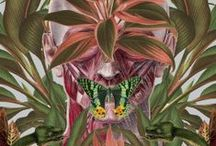 BOTANY | PRINTS / Nature in print, graphic & design inspiration for printed T-Shirts & Products. #downloadt-shirtdesigns