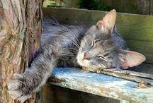 Cats-Taking a Cat nap... / sleeping cats... / by Navybluecats