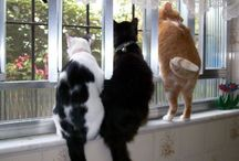 Cats-Our Neighborhood Watch .... / Cats in windows ... / by Navybluecats