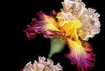 Flowers / Flowers & Plants