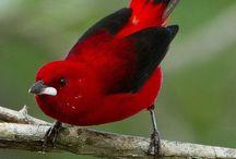 Aves del paraíso y otras
