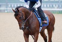Puros / Race Horse