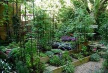 Garden / I don't like formal gardens. I like wild nature. It's just the wilderness instinct in me, I guess. Walt Disney