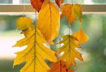 Thanksgiving / Fall / by Launi Johnson
