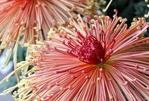 Fluer Fantasy / Beautiful Blooms On Display