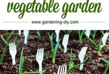 Garden Hacks / Make gardening easier with these great gardening tips and hacks.  Plenty of garden advice available.