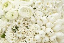 White  / Inspiration for white parties, textiles, paper, table settings and more...