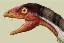 Dino Era