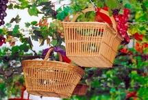 """Fête de la Vannerie à Vallabrègues / Chaque été les habitants de Vallabrègues se mobilisent pour faire revivre pendant 2 jours la fièvre """"des baissiers"""" : le joyeux retour au village des hommes partis plusieurs semaines récolter le roseau de Camargue. Des artisans venu d'Europe mais aussi d'autres horizons exposant leurs vanneries dans une joyeuse ambiance"""