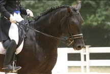 Les Rencontres Equestres Méditerannéennes 2013 / Les rencontres Equestres proposent de vous faire découvrir l'équitation de travail Américaine, Camarguaise et Portugaise, Horse-Ball, Cabaret Equestre... Chaque année au mois de Juillet