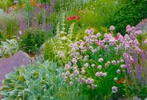 LG Gardens / Gardens designed by Lisa George over the past years
