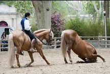 Les Rencontres Equestres Méditerranéennes  2014 / Championnats de France, Pur Sang Lusitanien, Pure Race Espagnole, Masters du Cheval Ibérique, Equitation de travail, Horse Ball et Cabaret Equestre. Photos : Patrick Gantz et Sandra Traullet