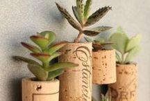 Wall Garden Designs