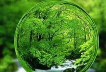The Shades of Green / Green.. Life