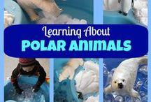 jääkarhut ja pingviinit