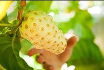 Noni Fruit / Learn all there is to know about Noni Fruit (Morinda Citrifolia) and the powerful medicinal properties Noni Fruit contains!
