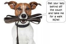 Pet Sitter & Dog Walker Funnies / There's never a shortage of humor for pet sitters and dog walkers!