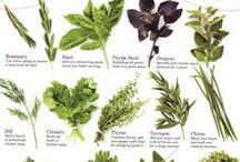 Herbal/Floral/Healing naturally / Healing herbs, magical herbs, flowers