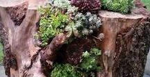 Roślinki / Plants