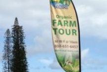 Noni Farm Tour / Read all about the happenings and testimonials of our Free Organic Noni Farm Tour! RSVP your spot on the tour today!