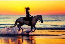 Travel Beaches / Beaches are beautiful!