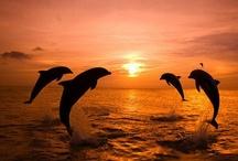 Wildlife Dolphins Whales & Sea Mammals