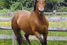 Animals Horses