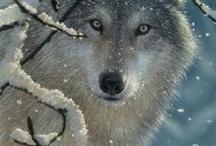Wildlife Wolves