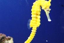 Mother Nature Sea & Sea Life