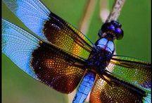 Mother Nature Dragonflies