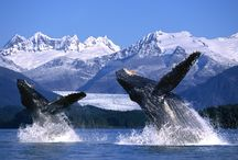 Alaska / Things to see and experience in Alaska!