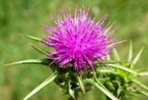 Health Medicinal Plants