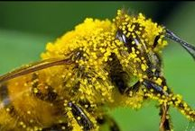 Bee Healthy / This is a celebration of honey bees and all that they are, all that they give, and how we can use their precious medicine for our wellbeing. Susan keeps and loves bees and makes her own medicines from honey and herbs.