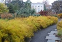 Great Natives for DC Region / Plants we've seen looking great and doing well in area gardens.
