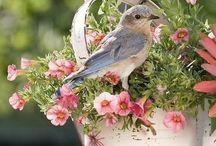 ❈ Flower Lovers ❈