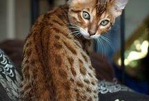 Sobre gatos  ♥ / Gateeeeeenhooos!