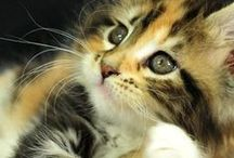 Cute Kittens / Cute and cuddly pictures of kittens