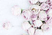 Flowers / Beautiful flowers for all occasions