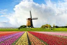 Painting Art | Netherland