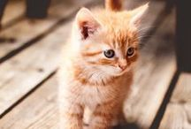 Cats everywhere / Pictures, illustrations and any pretty stuff related to cats, my favorite animals