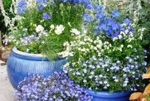 flower garden ideas / flowers