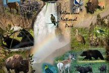 Non-sport Collages / Collage designs of wildlife, landscapes, animals, birds, flowers, etc.