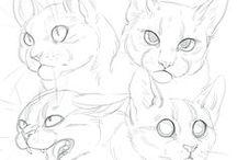 Creature Anatomy | Felines